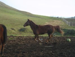 Lucy Galloping-1 by rachellafranchistock