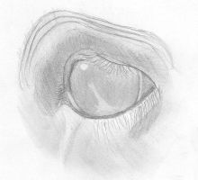horse eye study by BAC-of-all-trades
