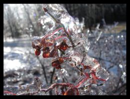 Iced Over Berries I by St0DaD