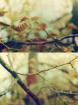 Welcome Autumn by danielagreco