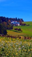Panorama behind a sea of flowers by patrickjobst