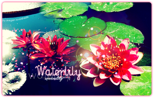 Waterlily by Loveshade