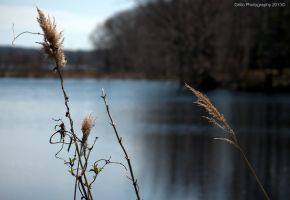 Reeds By the Water by SoulsLastSanctuary