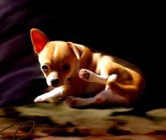Ella my chi 3 by dachfrnd