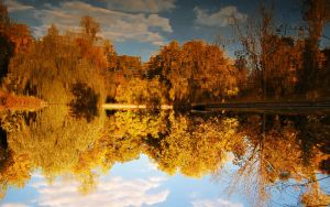 Reflections by Alexandru1988