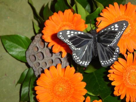 Butterfly on Orange flowers by fantasy-friend