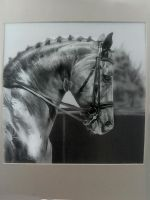 Elegance, Beauty, Passion... Dressage by Ianish