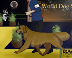 Joey gaiting at the WDS 2014. Extra Image. by joesse