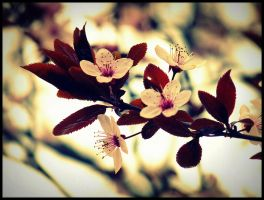 Spring flowers by etr-wroclove