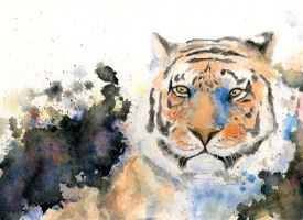Tiger by zyxzon