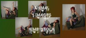 Animal 8 by kime-stock