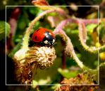 Lady-bug by maska13