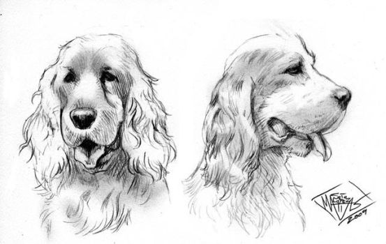 Cocker Spaniel dogs by MatiasSoto