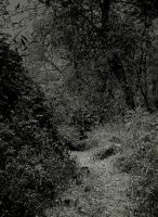 The path... by wolfcreek50