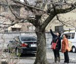 Japan - Cherry blossom inspection by Rikitza