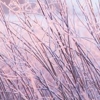 Winter 8 by paradoxofminds