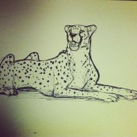 cheetah sketch by Seranalu