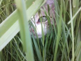 Cat in grass by Leykats
