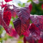 leaf-01 by georges-dahdouh