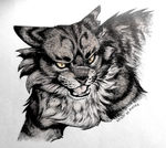Tigerstar by Spirit-Of-Alaska