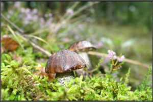 Birch Bolete by Clu-art