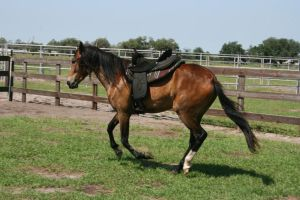 Tack Stock 6 by GloomWriter