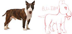 #1 Dog breed train - Bullterrier by wikitygrys