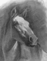 Horse Study 02 by mjk-art