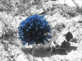 blue flower by Colliequest