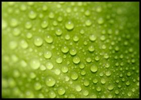 Green-Drops by Pilzbauer