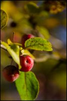A Couple of Cherries by GuadianAngel