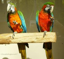 Funky Parrots Having a Cup of Tea by Cloudwhisperer67