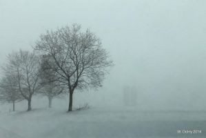 Trees in a Snowstorm by lenslady