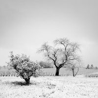The snow is rare in my area 2 by laurentdudot
