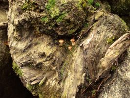 mushrooms in the cliff by soaythari