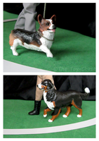 Breyer Dog Show - Corgi And Berner by The-Toy-Chest