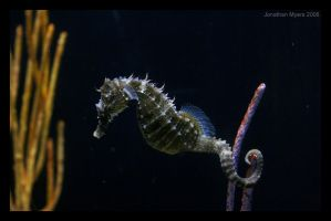 Seahorse by SpecOps2087
