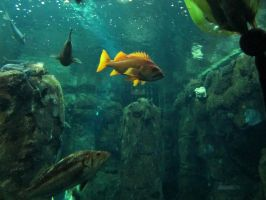 Fish 2 -- Sept 2009 by pricecw-stock