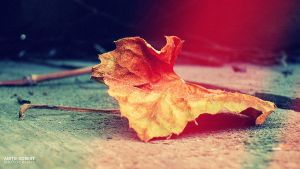 Leaf by SpEEdyRoBy