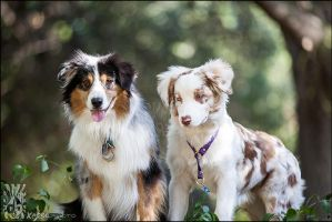 Seeing double merle by XetsaPhoto