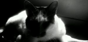 Gunther in black and white by capturedpoetry