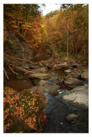 The Beauty of Fall by timseydell