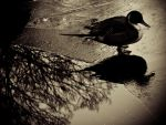 duck on ice under tree by aeravi
