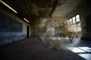 Daydream of a Cat by Hermetic-Wings