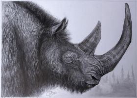 From Ancients Past - Wooly Rhinoceros by BlueCea