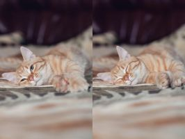 Sleepy Cat by Patholesia