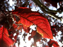 The Red Leaves Tree by Ceejay8887
