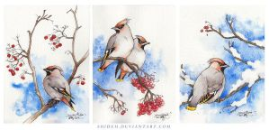 Bohemian Waxwings by shideh