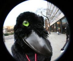 Corby: '...Caw?' by CuriousCreatures