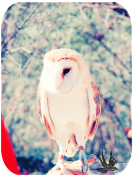 Owl Be Your Friend by loveletternotes